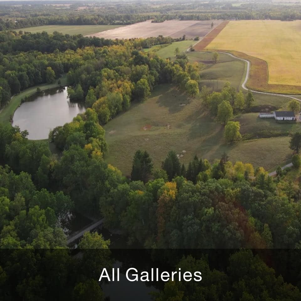 All Galleries